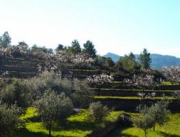 almond grove