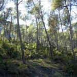 RASQUERA. FOREST FINCA OF 9 HECTARES - 25 000€  Ref: 066/17