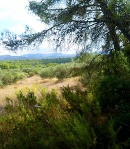 tivissa mountain